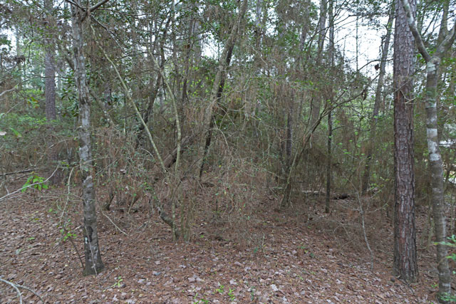5 acres alternative energy tyler county tx land and for Free land in texas
