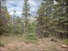 Cheap Colorado Land for Sale, 7.70 Acres