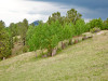1.16 Acres of Colorado Land for Sale