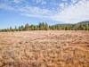 2.07 Acres Oregon Land