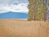Oregon Land, .25 Acres