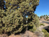 California Land for Sale, 0.39 Acres