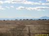 75 Acres Colorado Land