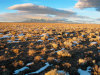 160 Acres of Colorado Land for Sale