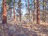 2.4 Acres of Oregon Land for Sale