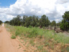 5 Acres New Mexico Land