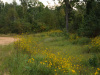 2.75 Acres Tennessee Land