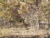 2.92 Acres Missouri Land