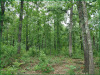 3.42 Acres of Cheap Missouri Land for Sale