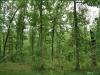Cheap Missouri Land for Sale, 7.30 Acres