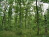 7.3 Acres Missouri Land