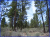 2.38 Acres Oregon Land