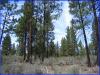 2.38 Acres of Oregon Land