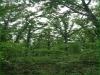 2.398 Acres Missouri Land