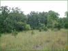 2.39 Acres of Cheap Missouri Land