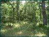 2.6 Acres Missouri Land