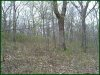 2.38 Acres of Cheap Missouri Land for Sale