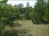 5.18 Acres of Missouri Land