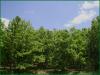 Cheap Missouri Land for Sale, 2.86 Acres