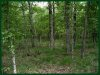 Cheap Missouri Land for Sale, 1.96 Acres