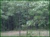 3.40 Acres of Cheap Missouri Land for Sale