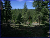 .99 Acres of California Land for Sale