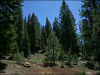California Land for Sale, .97 Acres
