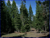 .92 Acres of California Land for Sale