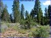 Cheap Oregon Land for Sale, 5.98 Acres
