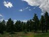 .33 Acres Colorado Land