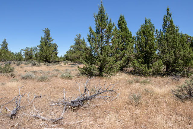 California Land for Sale - 1 46 acres in Modoc County