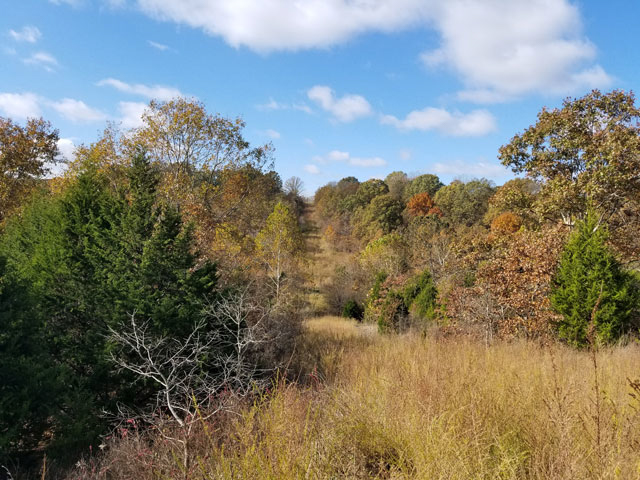 11.40 Acres of Missouri Land for Sale